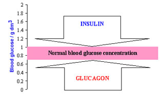 insulin and glucagon relationship advice
